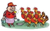 养鸡4大骗局,买鸡苗的鸡农们注意了